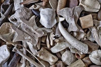 Čo sú to kosti