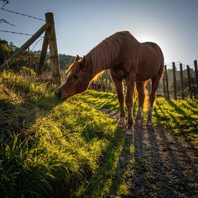 Kĺbová výživa pre kone